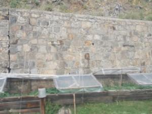 39 у стены отвоеван клочок земли под теплицу