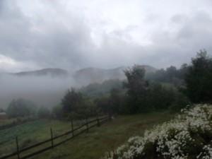 59 утро туманное после ночного дождя