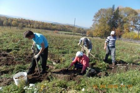 8 сентября 2016 года Свято-Никольский приход города Слюдянки выехал на приходской участок в деревню Быстрая выкопать посаженную там картошку